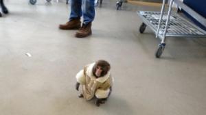 The monkey in John's Brain