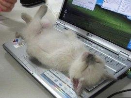 Kittyon a Keyboard
