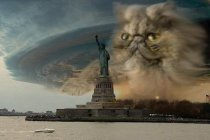 Fake Picture Grumy Cat Storm