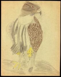 Jaimie_Sketch3_eagle
