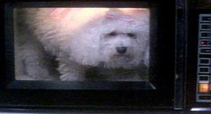 microwave-poodle