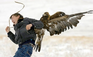 eagle-attacks-cameraman
