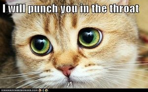 punch cat