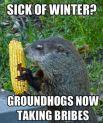 groundhog bribe