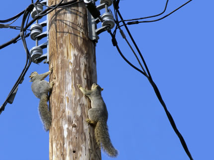 Power Play Squirrels