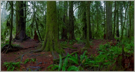 colour-cathedral-grove-vancouver-island-bc2