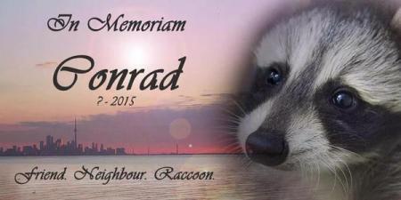 Conrad the Racoon