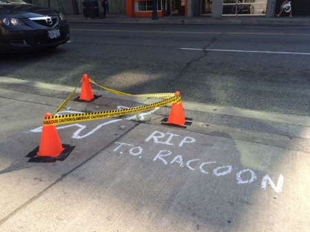 A makeshift crime scene is set up on Church Street, where a dead raccoon was found and left for over 13 hours before being picked up by a city worker in Toronto on Friday, July 10, 2015. Flowers and notes continued to pile up more than 12 hours after the raccoon was first discovered, and even a Toronto city councillor chimed in with several tweets urging the city to remove the raccoon. THE CANADIAN PRESS/Liam Casey
