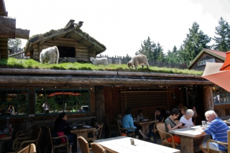 goats on a roof 1