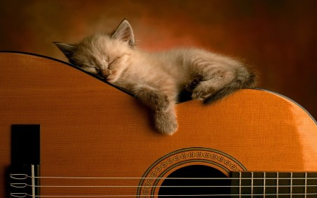 Kitten_asleep_guitar