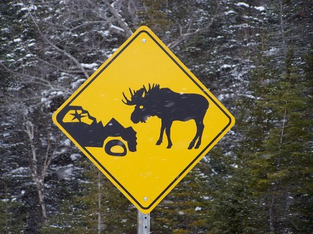 moose accident sign