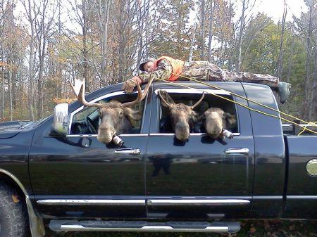 moose_roofrack