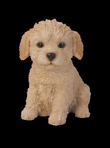 labradoodle-puppy
