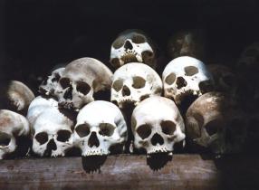 bleached-skulls