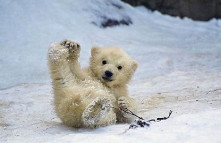 cute-bear-sliding